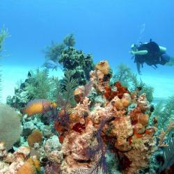 Plongée récif