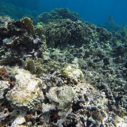 Fond Marin avec snorkelling