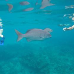 Mexique... l'idéal pour la plongée