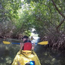 Mangrove en Kayac à St Thomas